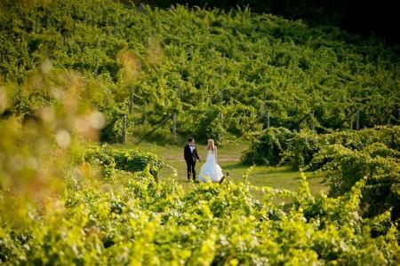 Ciccone Vineyard